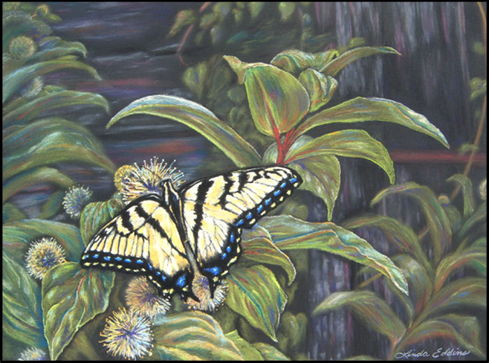 Christina's Swallowtail